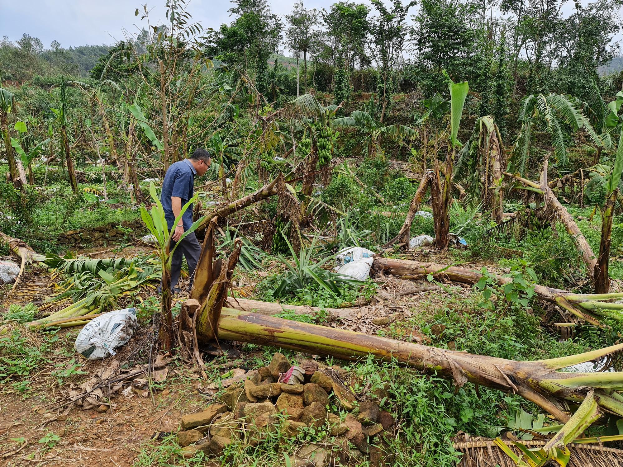 Phó Bí thư Quảng Nam: Đau xót khi nhìn nhà dân, cây ăn quả ngã đổ - Ảnh 11.