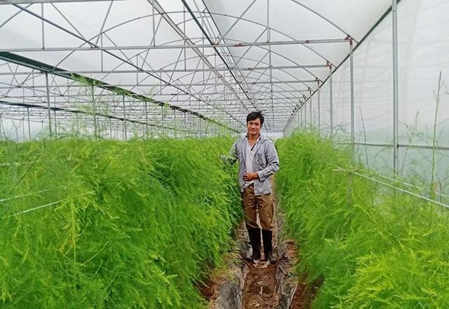 Liên kết chuỗi sản xuất măng tây thành công ở đất quan họ - Ảnh 1.