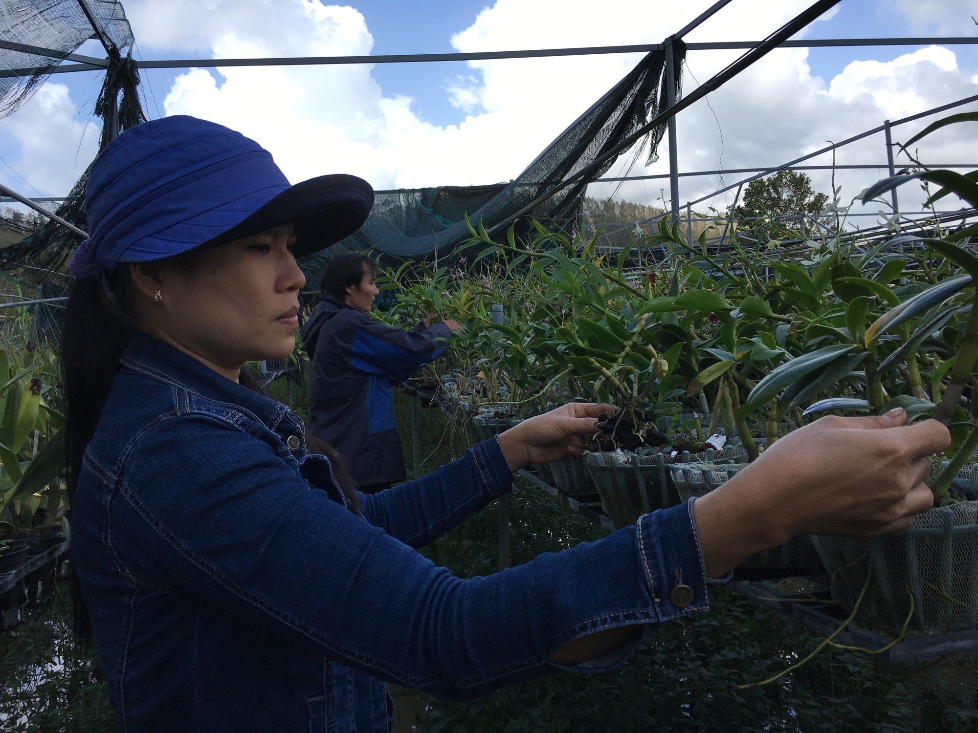 Quảng Nam: Nông dân trồng lan trắng tay sau bão, lũ - Ảnh 2.