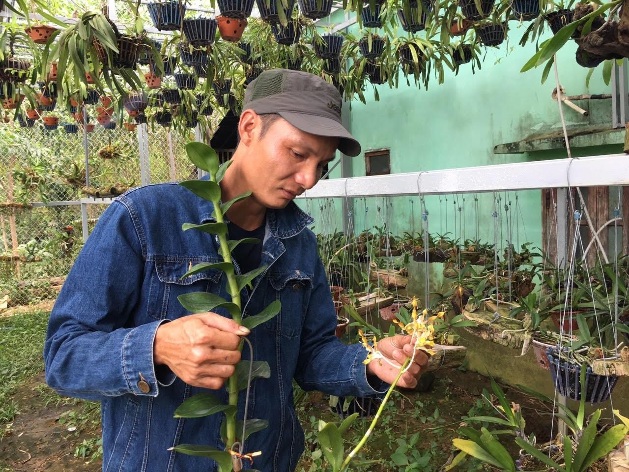 Quảng Nam: Nông dân trồng lan trắng tay sau bão, lũ - Ảnh 3.