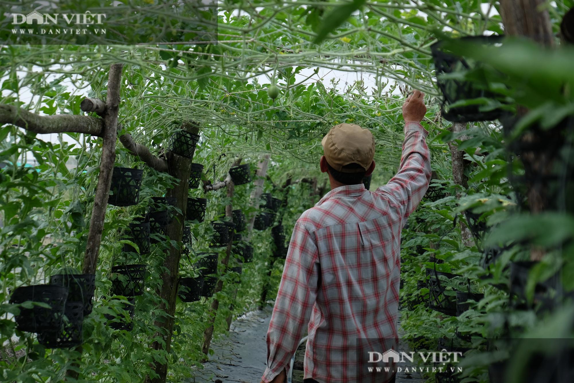 Trồng dưa hấu kiểu lạ, khách chỉ đến ăn tại vườn thu nửa tỷ mỗi năm - Ảnh 4.