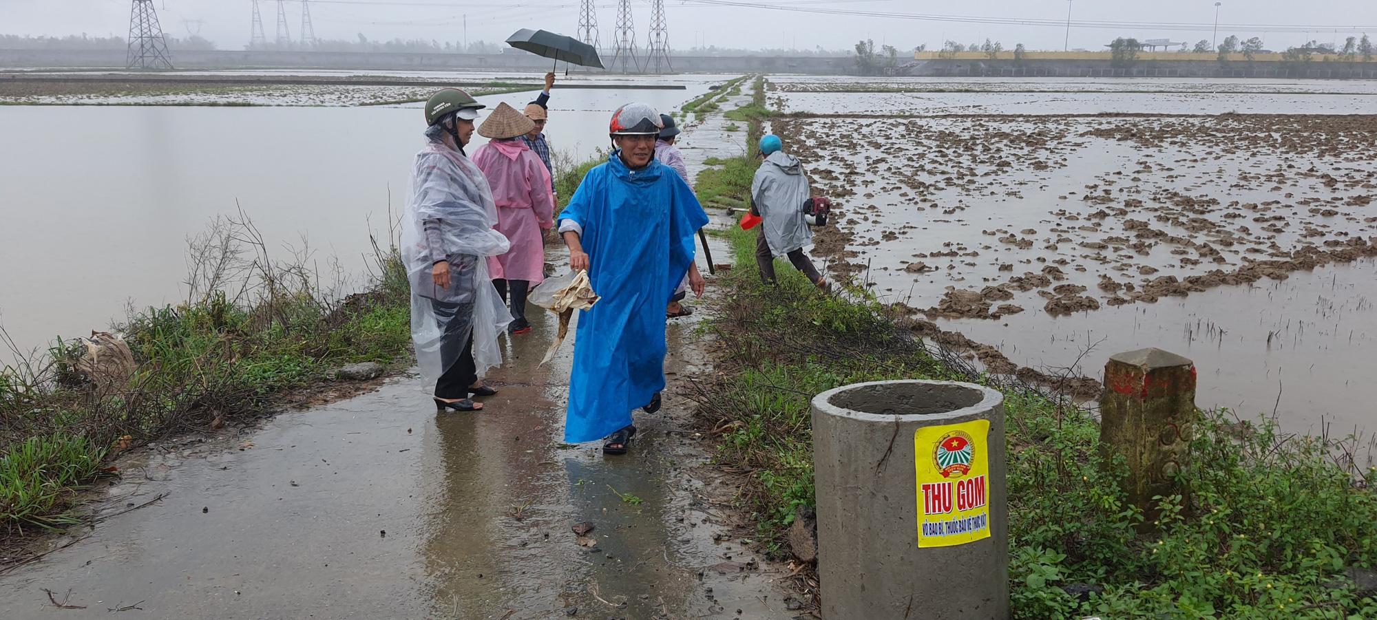 Hội Nông dân Đà Nẵng ra quân dọn vệ sinh đồng ruộng và hỗ trợ nông dân sản xuất sau bão lũ - Ảnh 4.