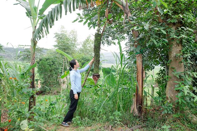 Hà Tĩnh: Dân cả 1 vùng kéo đến xem buồng chuối hơn 100 nải ở Hương Sơn - Ảnh 3.