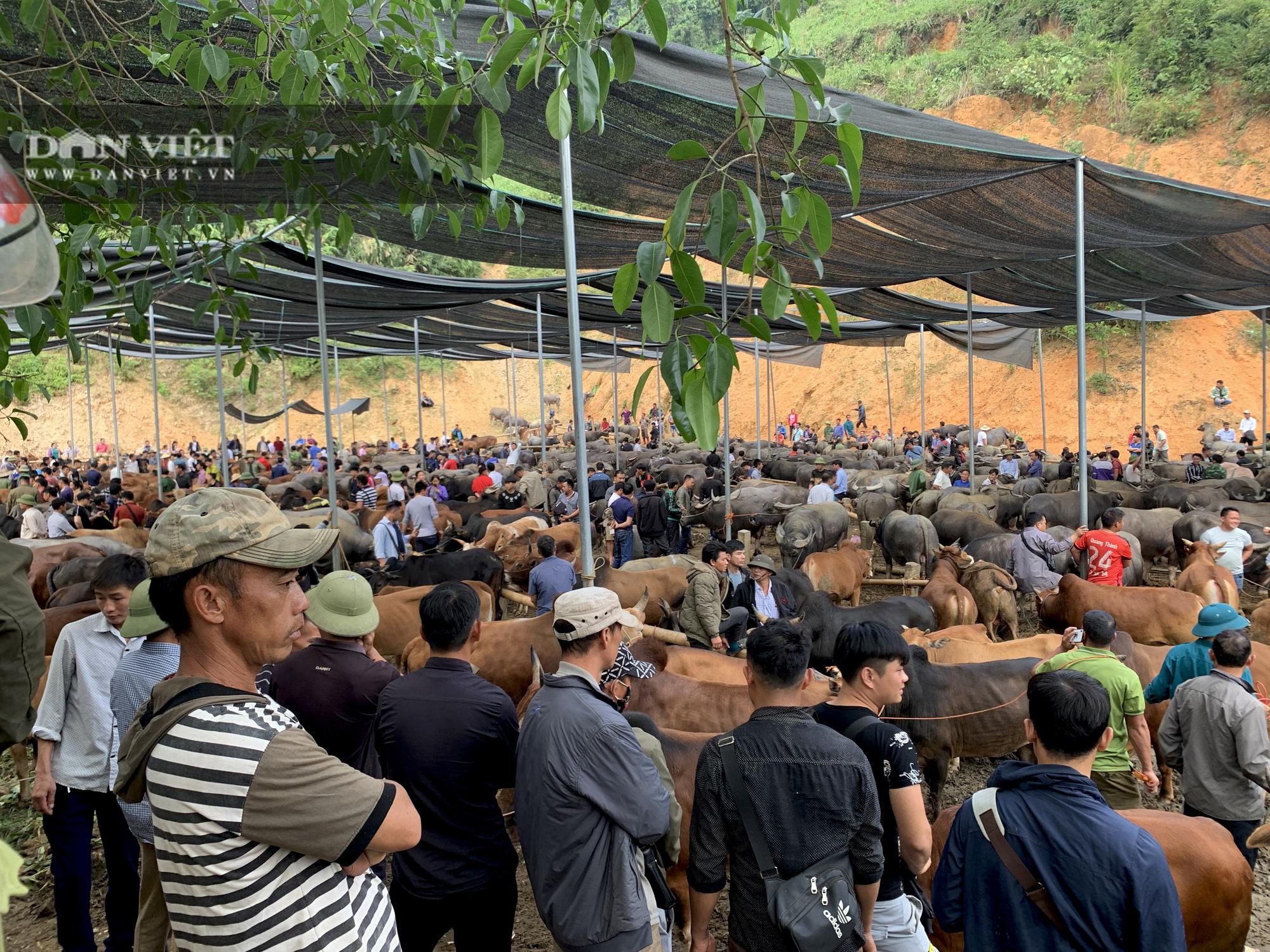 Bắc Kạn: Nguy cơ mất an toàn tại chợ trâu, bò Nghiên Loan - Ảnh 4.