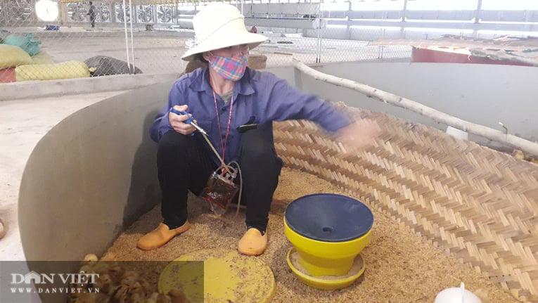 Nuôi gà ấp trứng anh nông dân thu lãi vài trăm triệu mỗi năm - Ảnh 8.