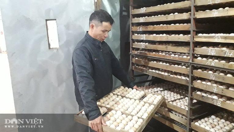 Nuôi gà ấp trứng anh nông dân thu lãi vài trăm triệu mỗi năm - Ảnh 2.