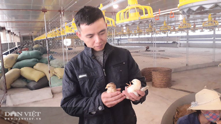 Nuôi gà ấp trứng anh nông dân thu lãi vài trăm triệu mỗi năm - Ảnh 6.
