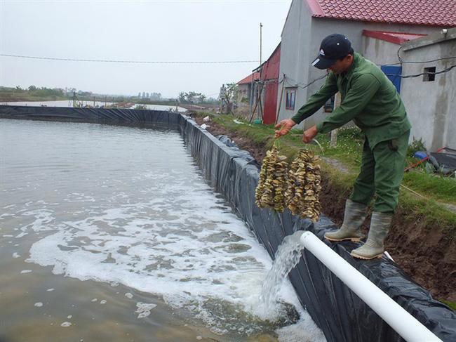 Có đại dịch Covid-19, ngành thủy sản vẫn tăng trưởng cao 5,2%/năm - Ảnh 2.