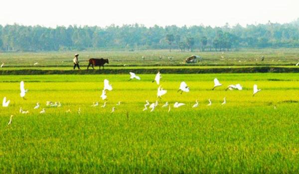 Bồi thường đất nông nghiệp cho cán bộ, công chức - Ảnh 1.