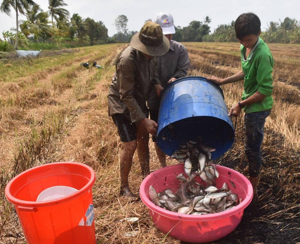 """Cà Mau: Vùng đất trước rùa vàng bò lổm ngổm, nay dân bị cuốn vào """"cơn lốc đổi đời"""", con cá đồng bỗng biến mất - Ảnh 1."""