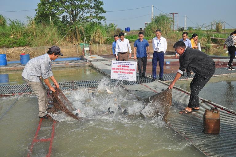 Bắc Ninh: Nuôi nhốt loài cá trắm đen to bự trong lồng, kéo mẻ lưới lên nhiều người trầm trồ - Ảnh 1.