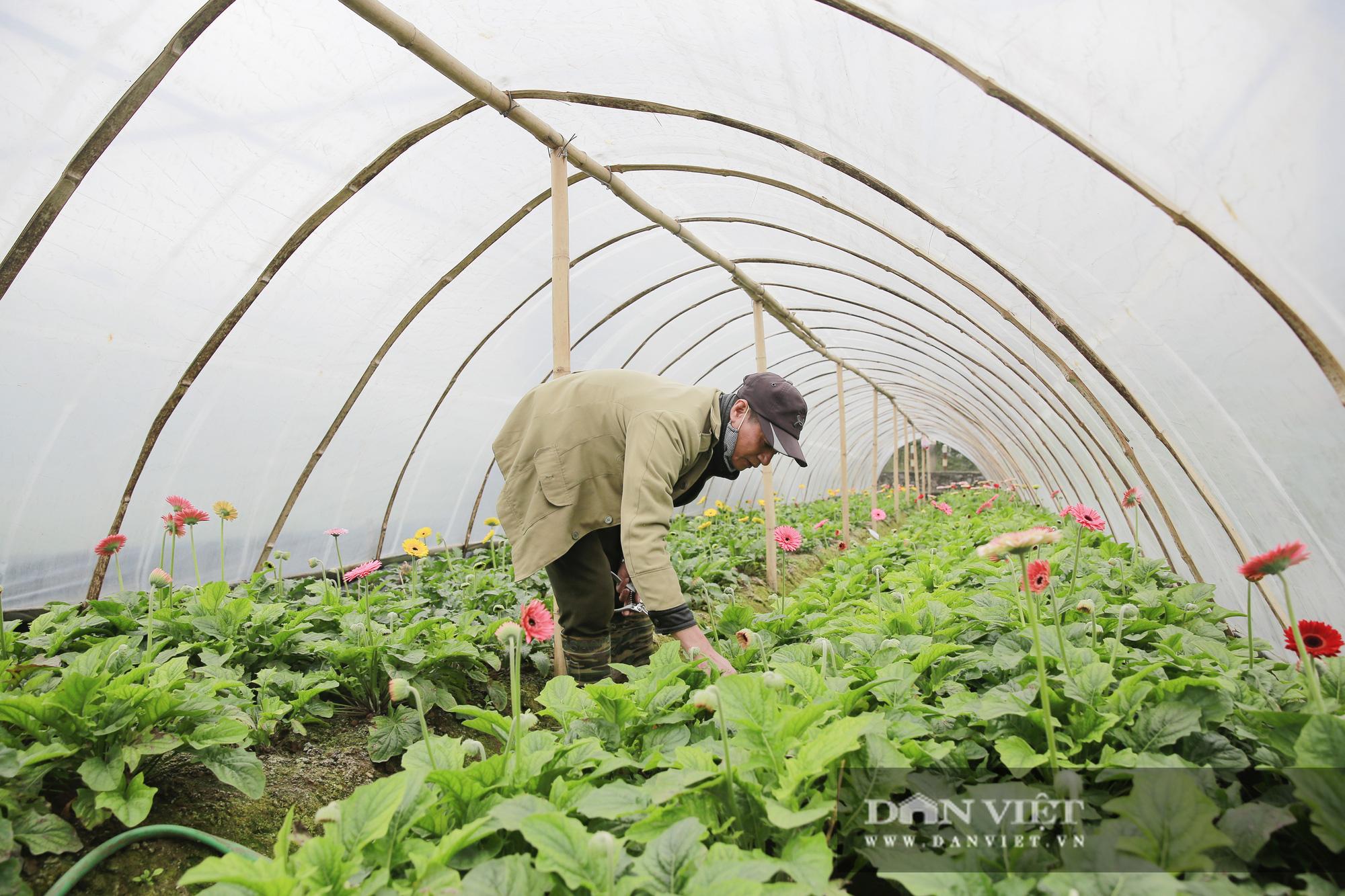 """Người trồng hoa Tây Tựu """"lạc quan"""" trước thời tiết giá lạnh - Ảnh 2."""