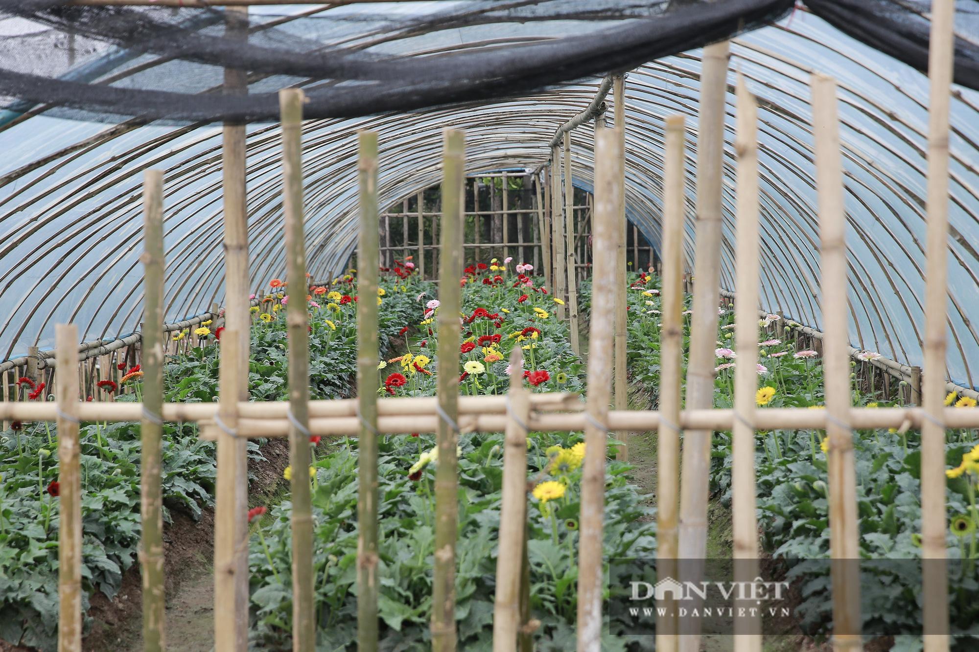 """Người trồng hoa Tây Tựu """"lạc quan"""" trước thời tiết giá lạnh - Ảnh 8."""