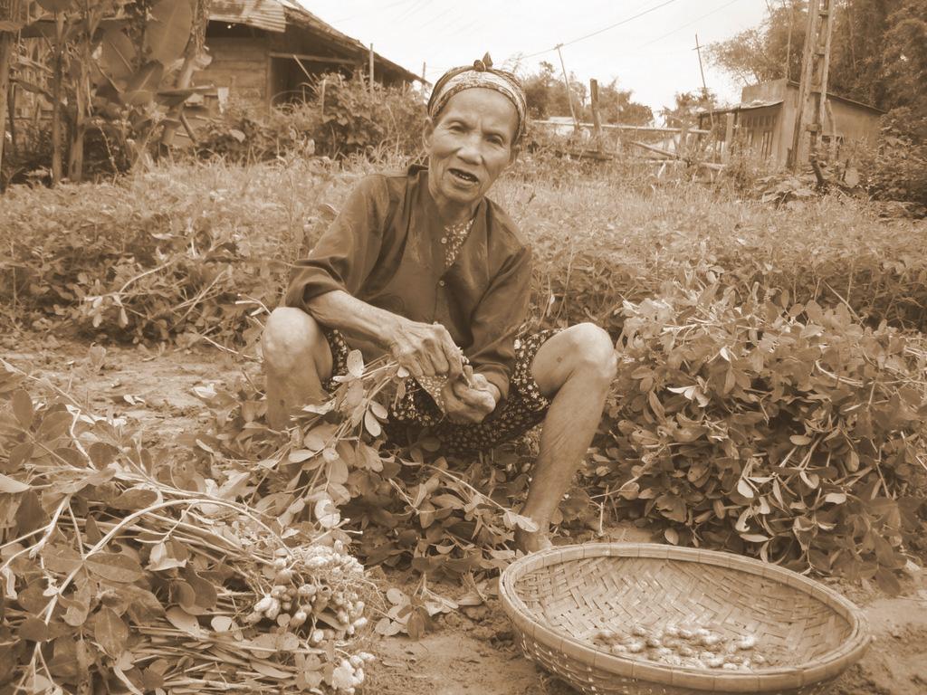 Kể chuyện làng: Tuổi thơ đi qua bao mùa động phộng - Ảnh 7.