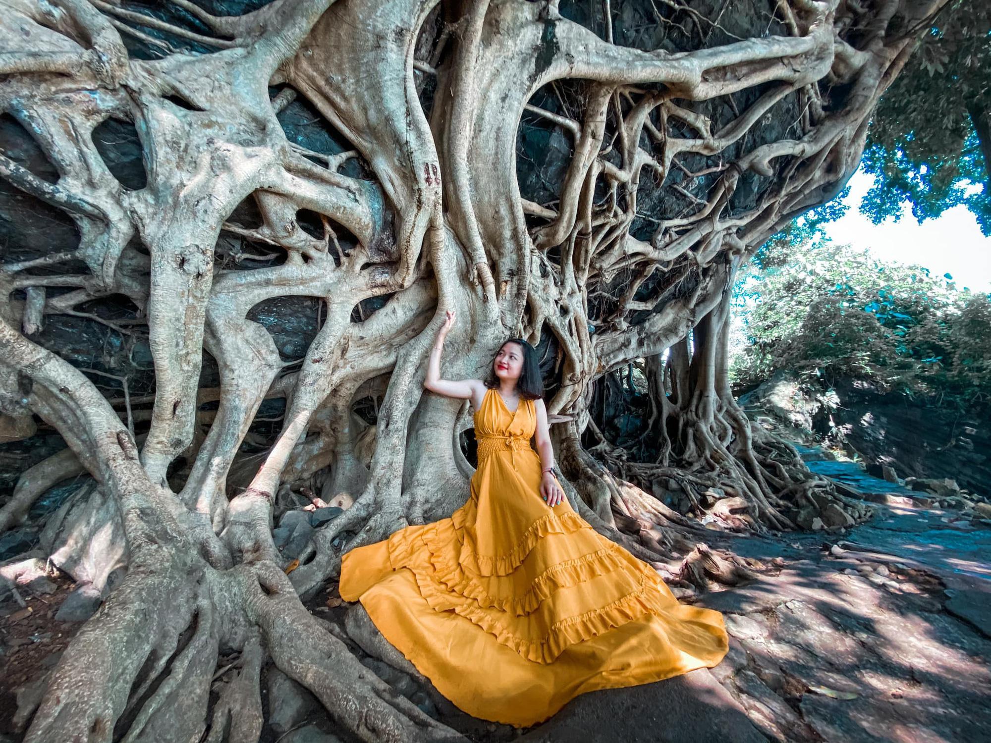 """Cây si cổ thụ có bộ rễ """"khủng"""" hút du khách tới chụp ảnh ở Đắk Lắk - Ảnh 1."""