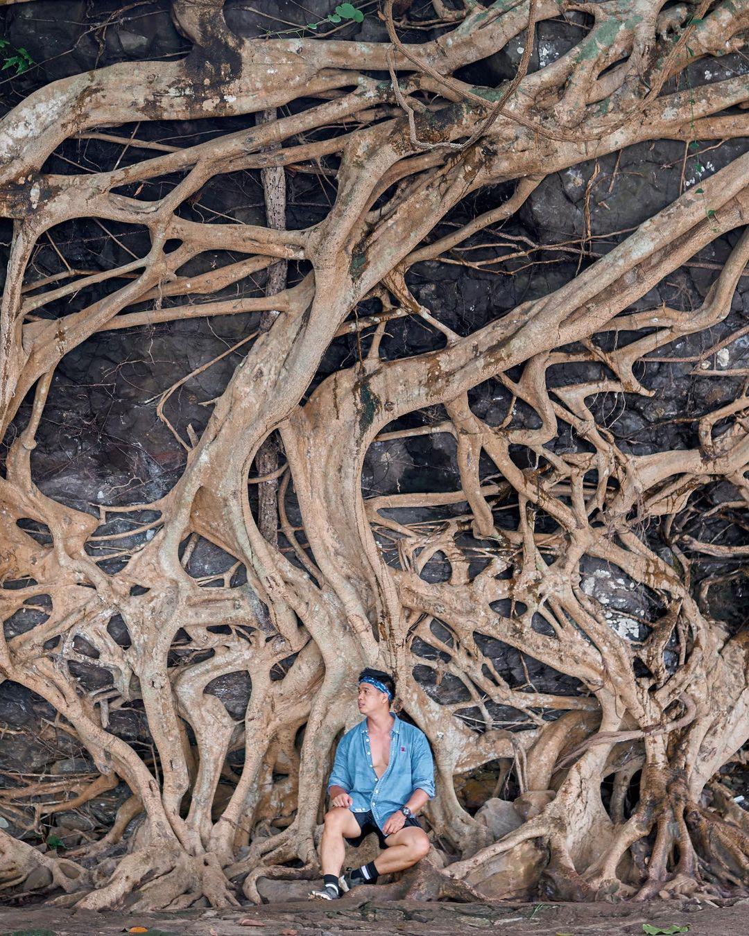 """Cây si cổ thụ có bộ rễ """"khủng"""" hút du khách tới chụp ảnh ở Đắk Lắk - Ảnh 3."""