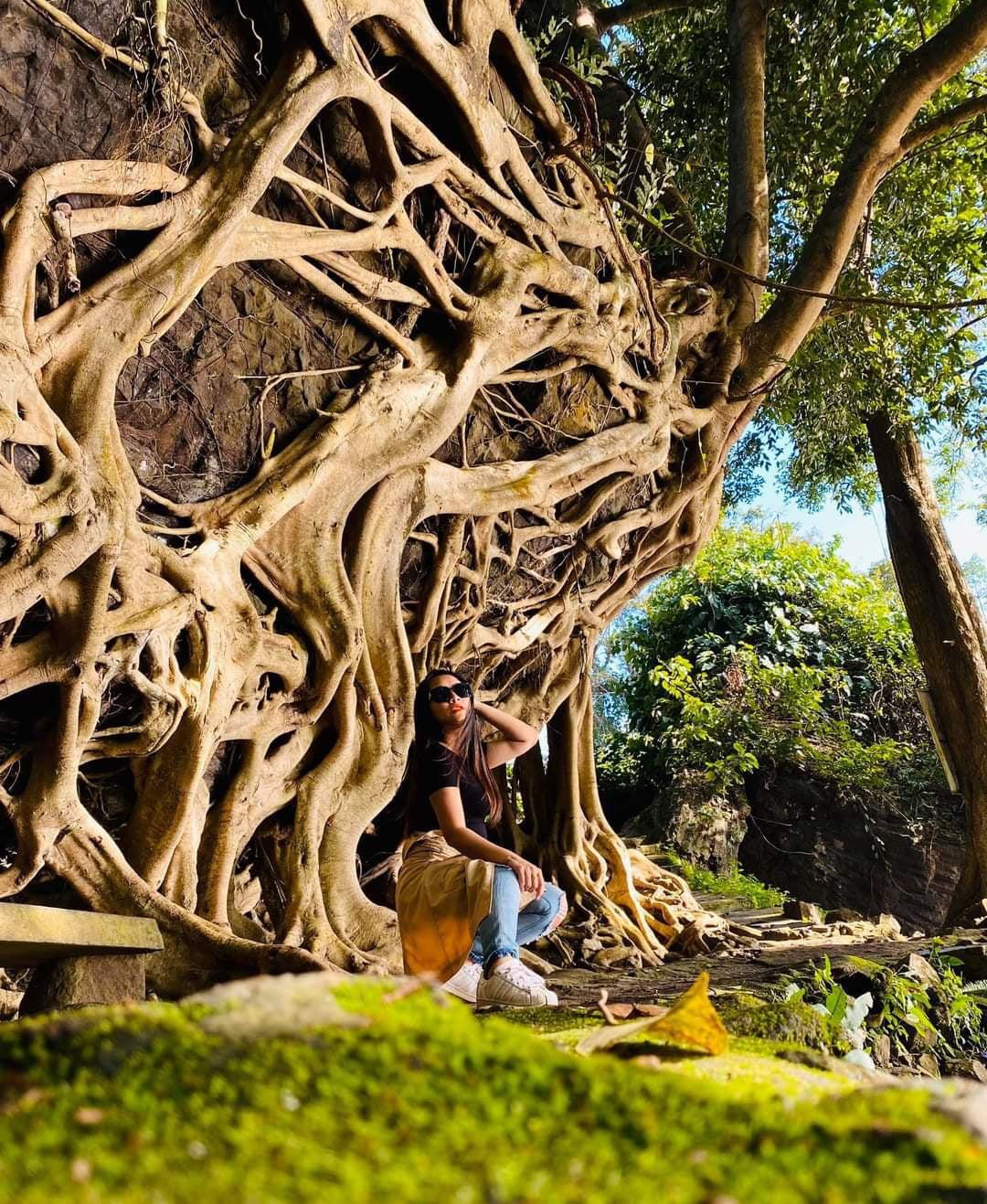 """Cây si cổ thụ có bộ rễ """"khủng"""" hút du khách tới chụp ảnh ở Đắk Lắk - Ảnh 4."""