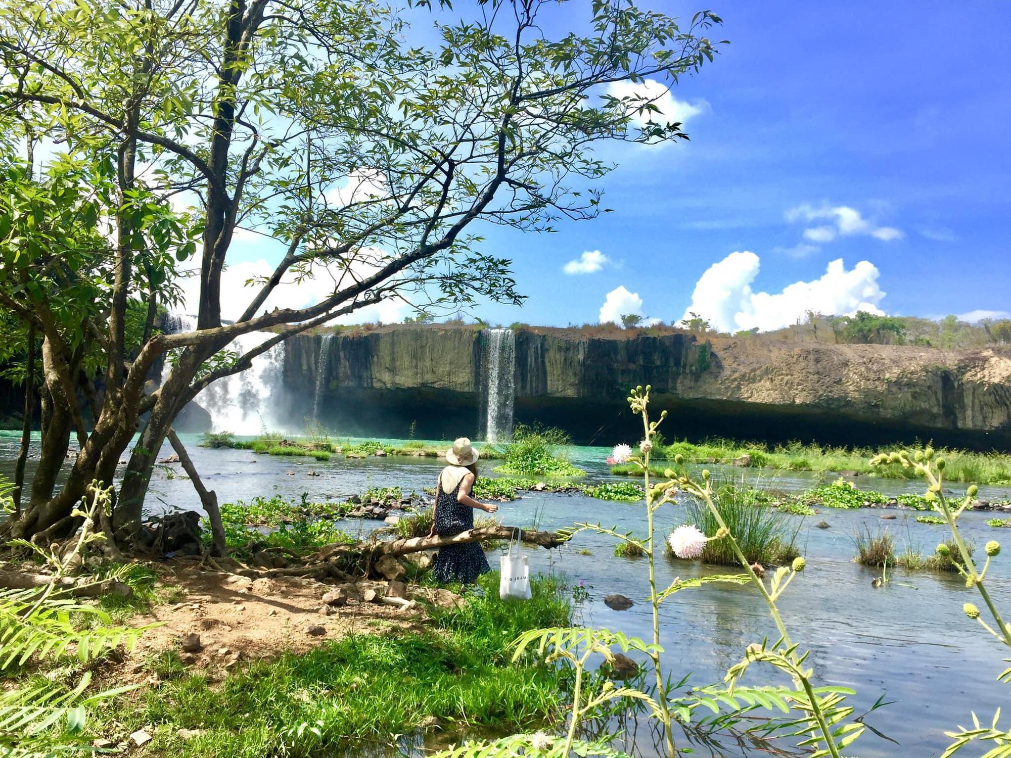 """Cây si cổ thụ có bộ rễ """"khủng"""" hút du khách tới chụp ảnh ở Đắk Lắk - Ảnh 9."""