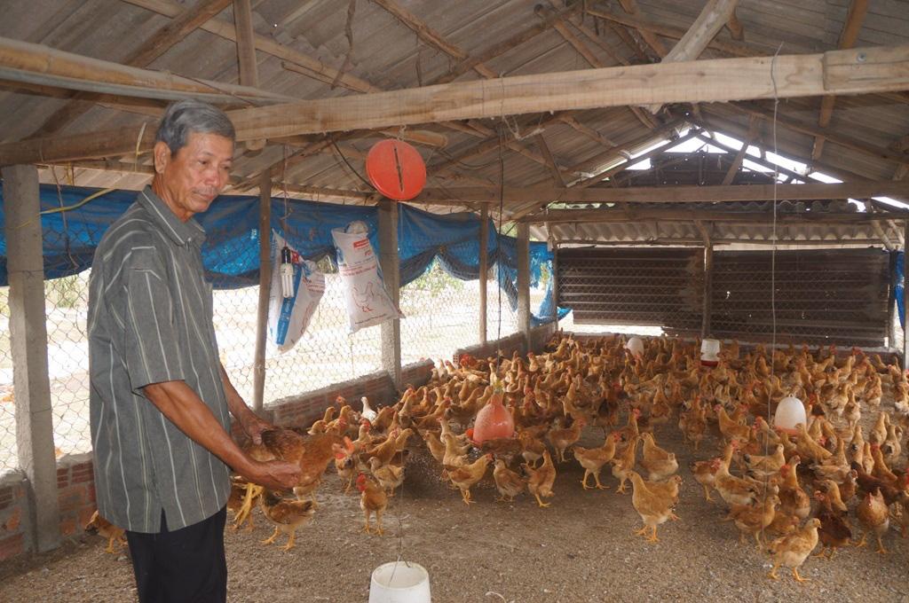Quảng Nam: Tam Kỳ hướng đến nền nông nghiệp sạch, nông nghiệp cao - Ảnh 3.