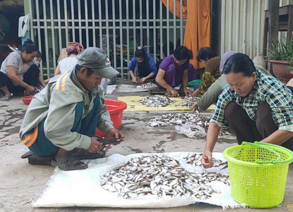Có thu nhập khá từ nghề làm mắm cá linh  - Ảnh 1.