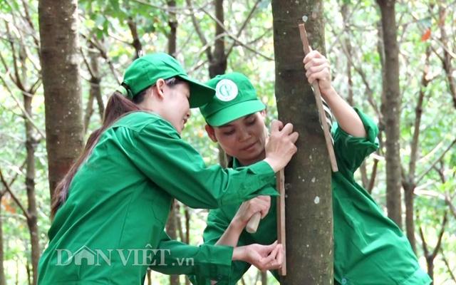 Công nhân cạo mủ của công ty cao su Phú Riềng