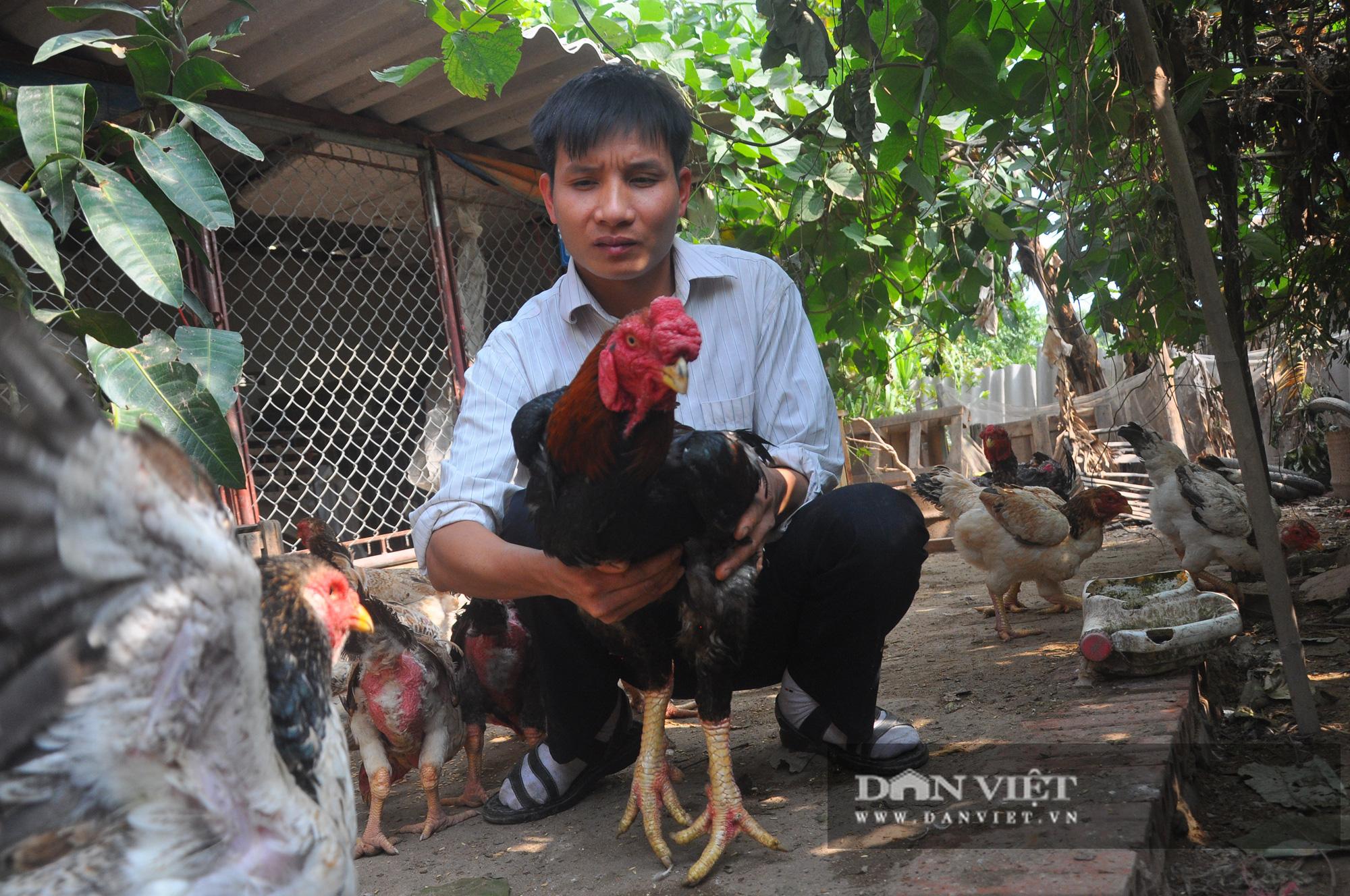 """Thị trường cây, con Tết 2021: Xuất hiện siêu phẩm kỳ dị giá trăm triệu, gà đặc sản có nguy cơ """"cháy hàng"""" - Ảnh 4."""
