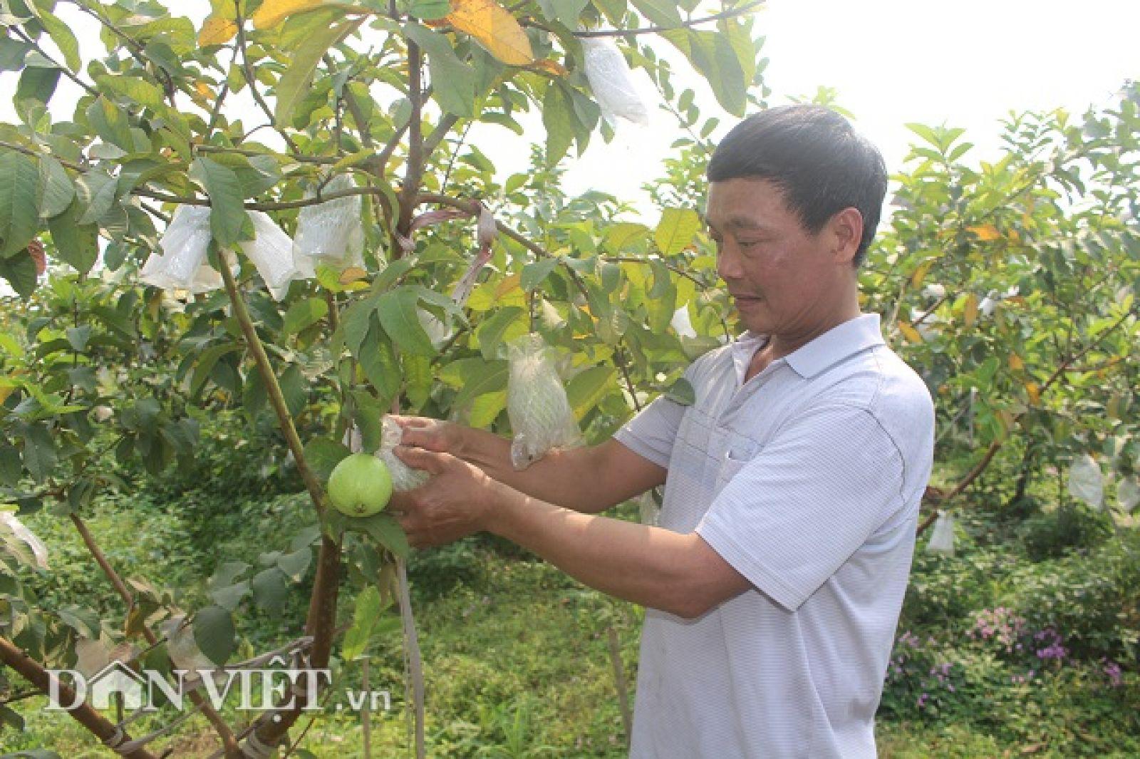 Nông nghiệp Thủ đô bứt phá nhờ công nghệ sản xuất giống cây - con hiện đại - Ảnh 3.