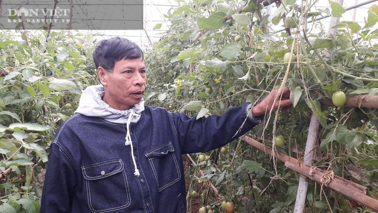 Thái Nguyên: Trồng rau dưa an toàn quanh năm, ông nông dân thu nửa tỷ đồng mỗi năm - Ảnh 4.