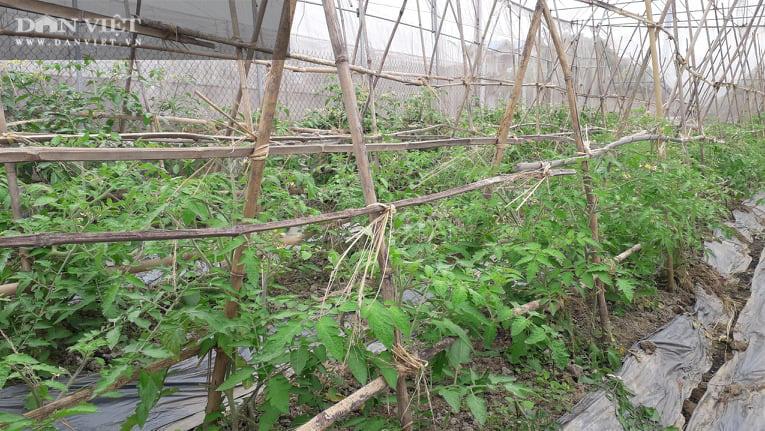 Thái Nguyên: Trồng rau dưa an toàn quanh năm, ông nông dân thu nửa tỷ đồng mỗi năm - Ảnh 1.