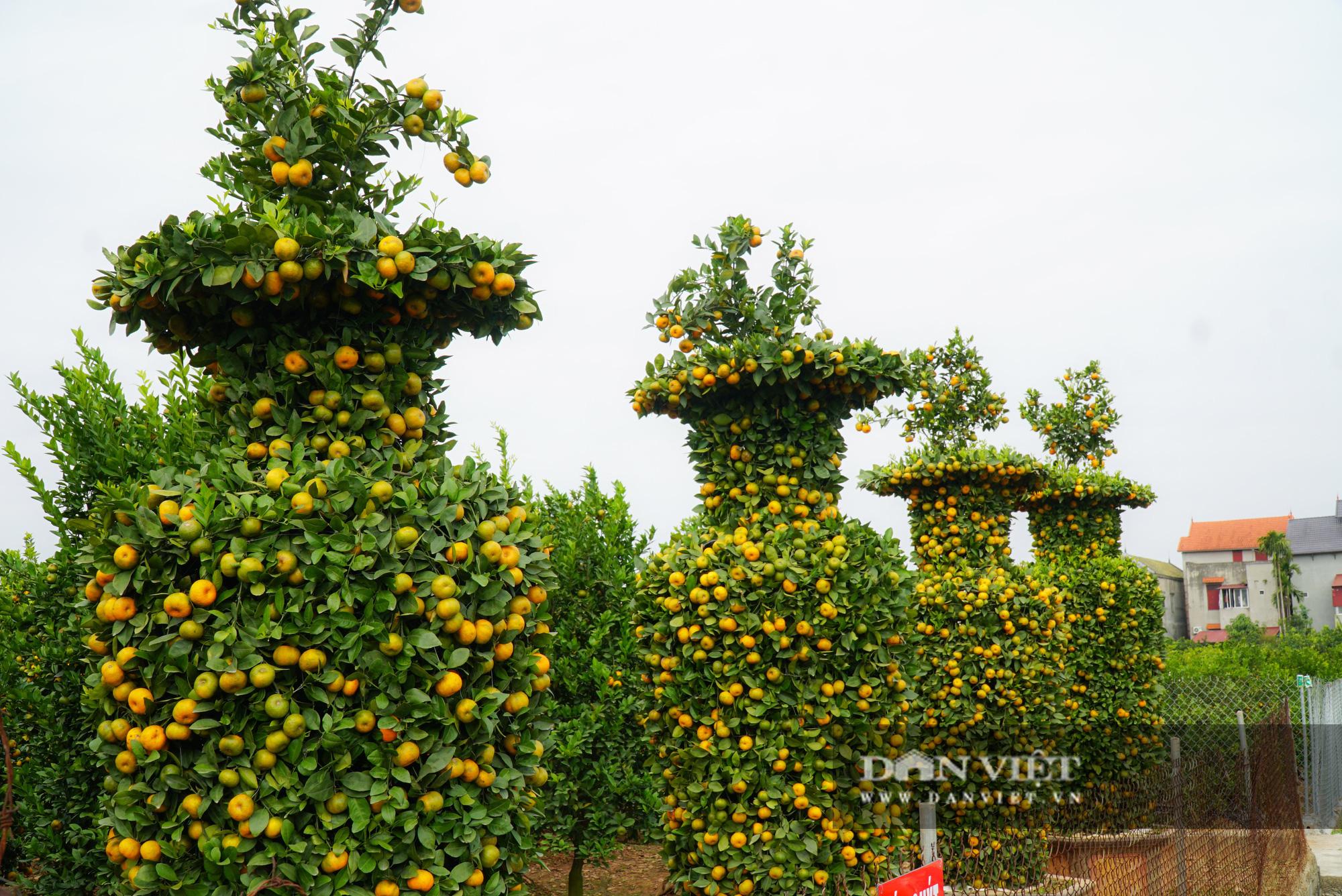 Quýt cảnh giảm giá sâu người trồng ngậm ngùi chịu lỗ - Ảnh 9.