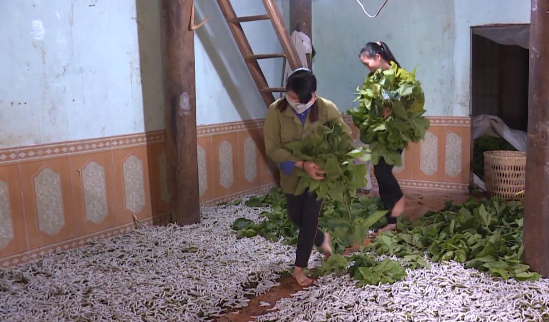 Người Mường trồng dâu, nuôi tằm thoát nghèo - Ảnh 3.