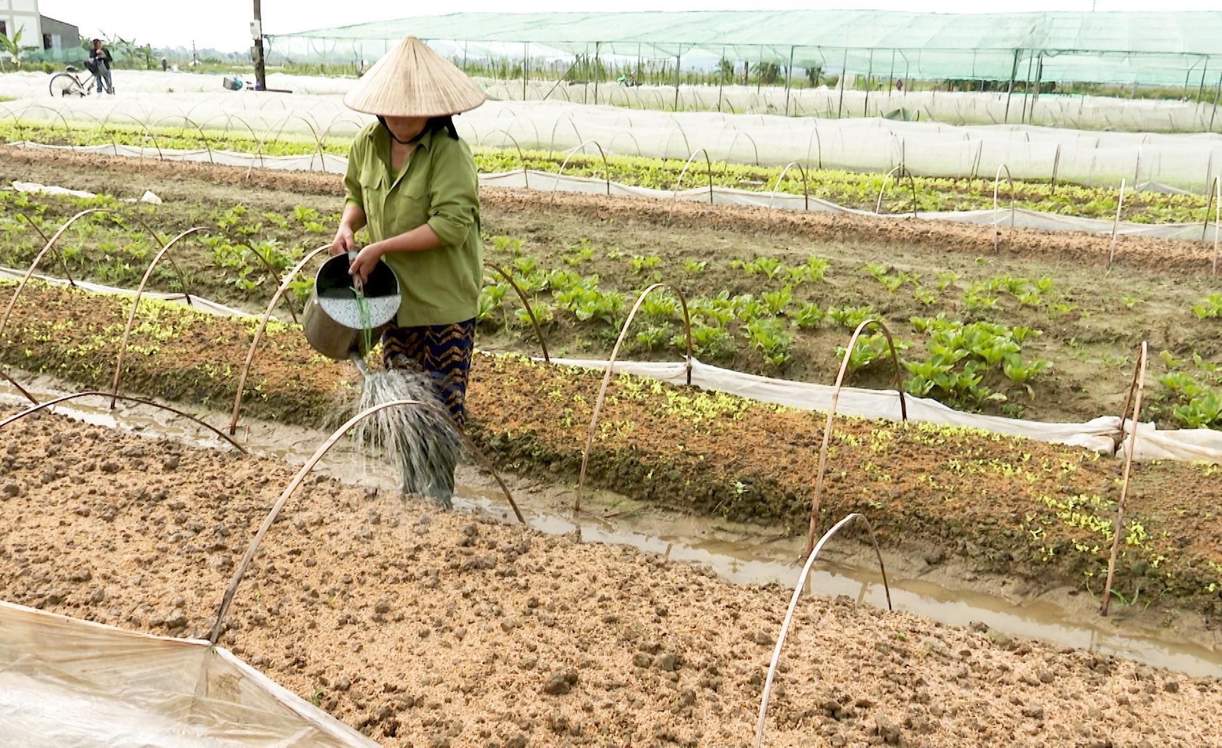 Những tỉnh nào được hỗ trợ miễn phí hạt giống để khắc phục thiệt hại do thiên tai? - Ảnh 2.
