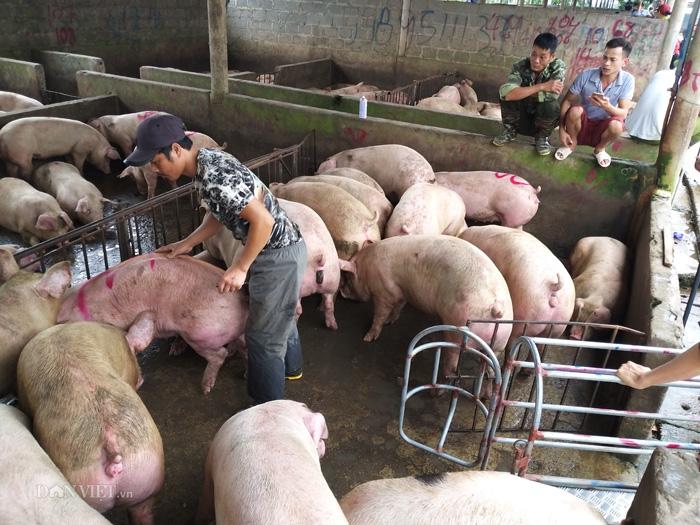 Giá lợn hơi hôm nay 2/12: Tăng - giảm nhẹ ở một số địa phương - Ảnh 1.