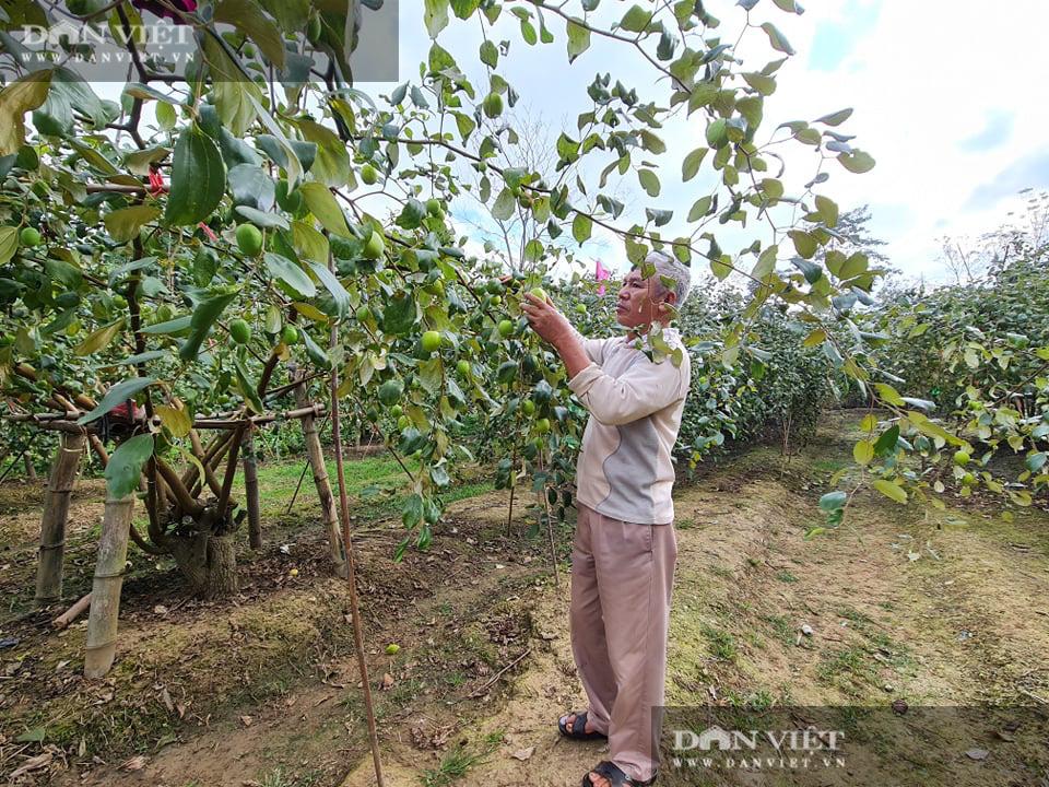 Điện Biên: Giám đốc HTX rau xanh trồng táo lê cho trái to đùng, ngọt lịm - Ảnh 4.