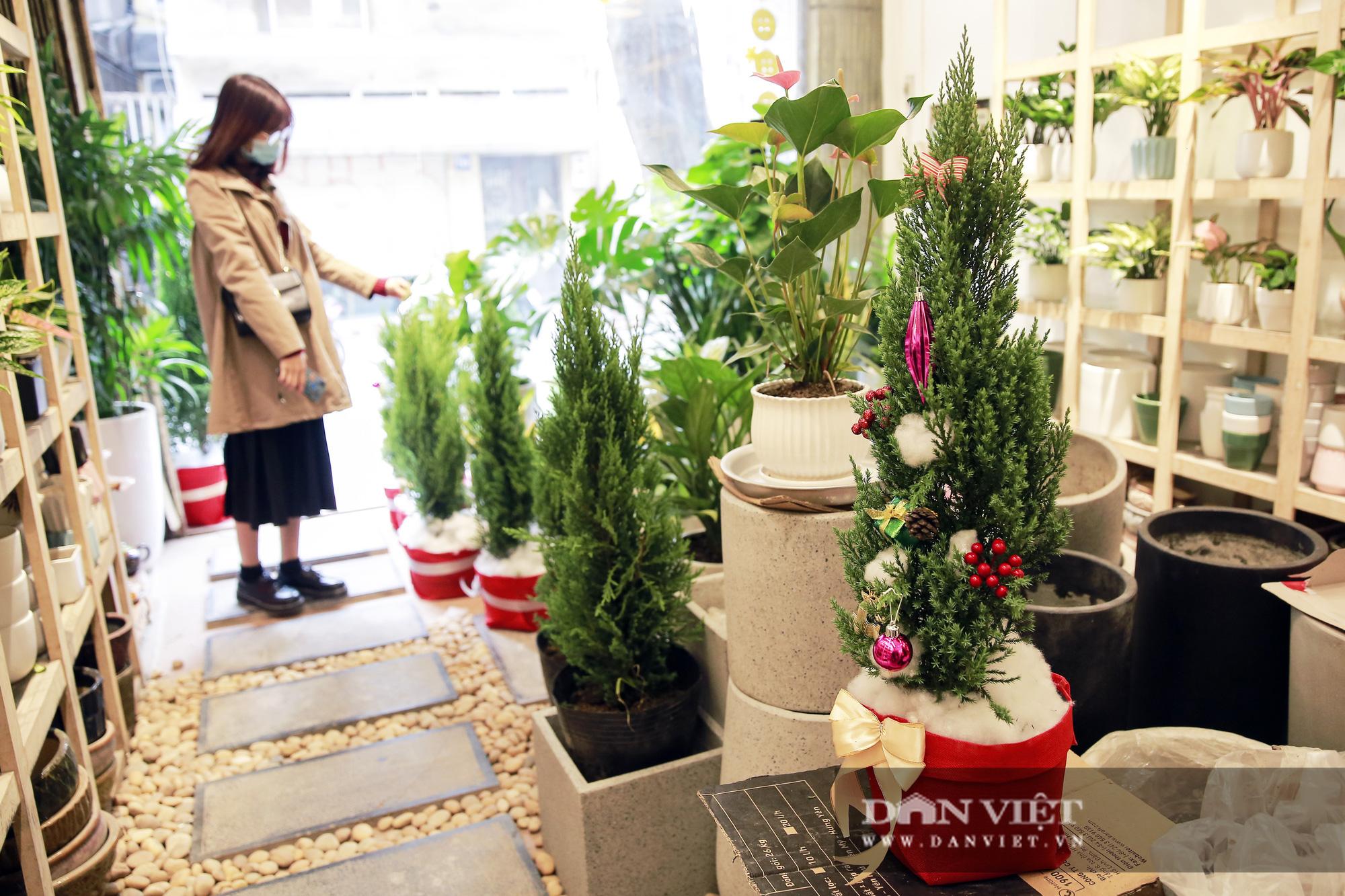"""Giá chỉ từ 100.000 đồng, """"bản sao"""" của cây thông thật đắt khách dịp Giáng sinh 2020 - Ảnh 10."""