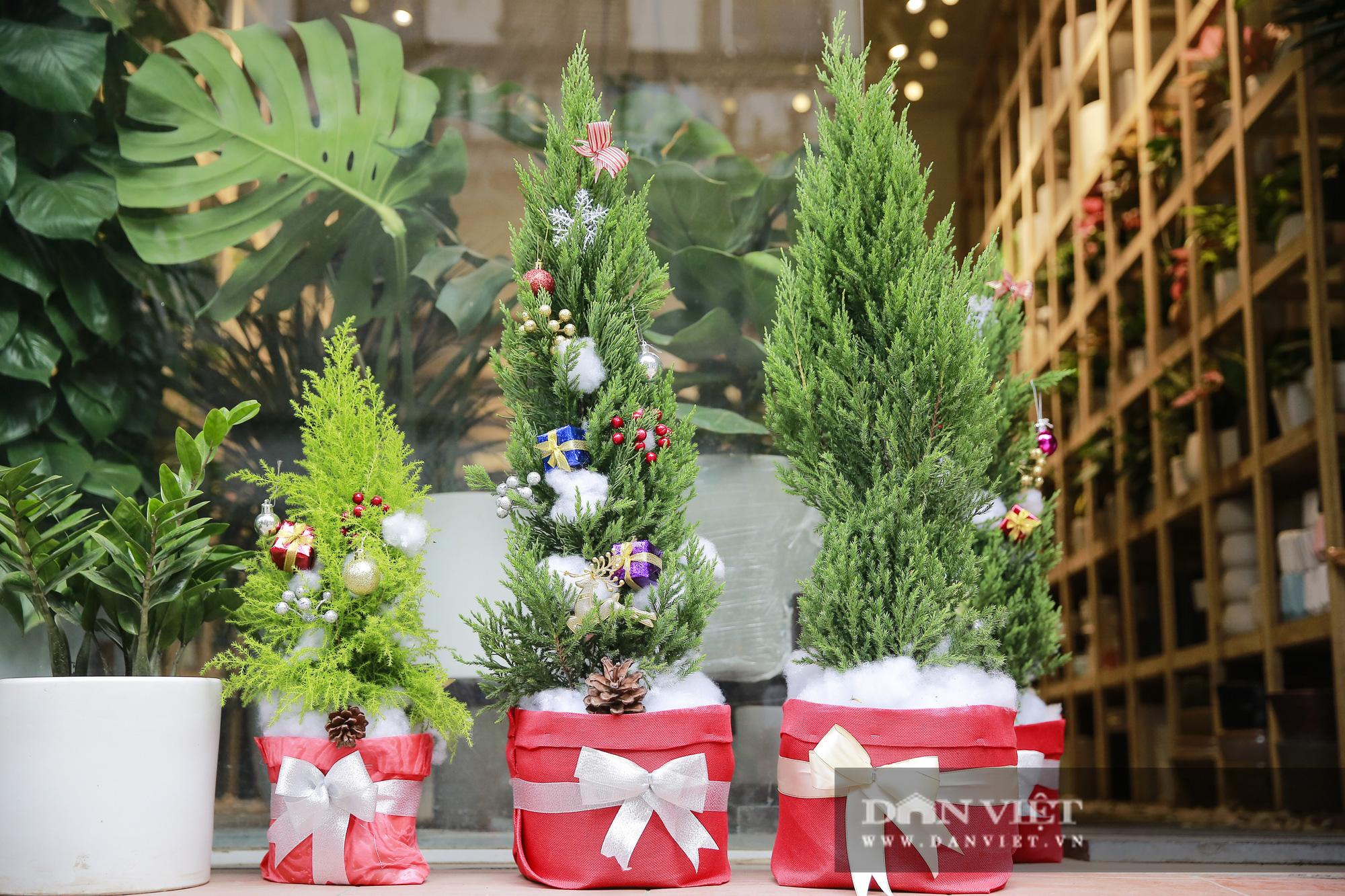 """Giá chỉ từ 100.000 đồng, """"bản sao"""" của cây thông thật đắt khách dịp Giáng sinh 2020 - Ảnh 7."""
