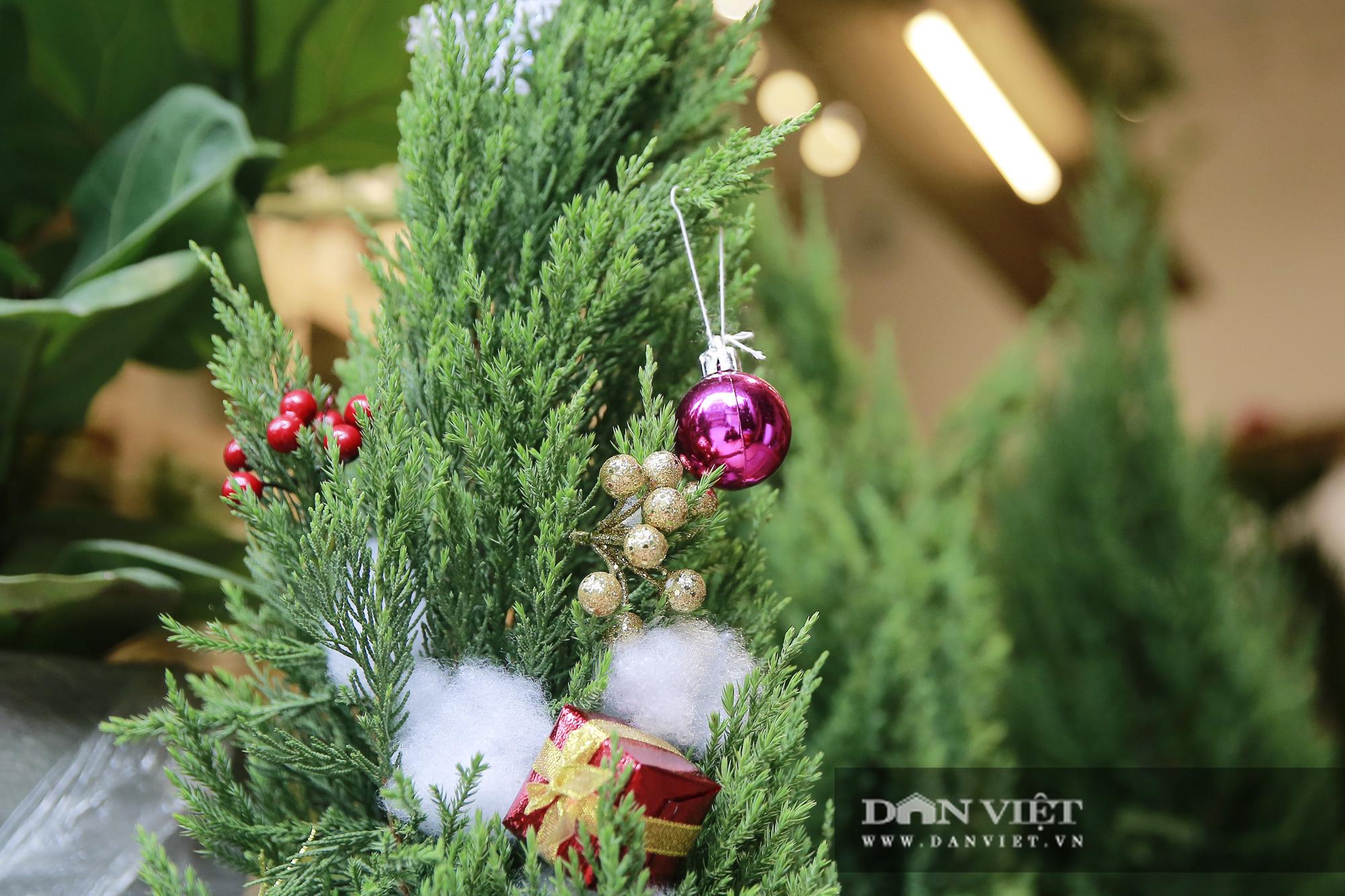"""Giá chỉ từ 100.000 đồng, """"bản sao"""" của cây thông thật đắt khách dịp Giáng sinh 2020 - Ảnh 11."""