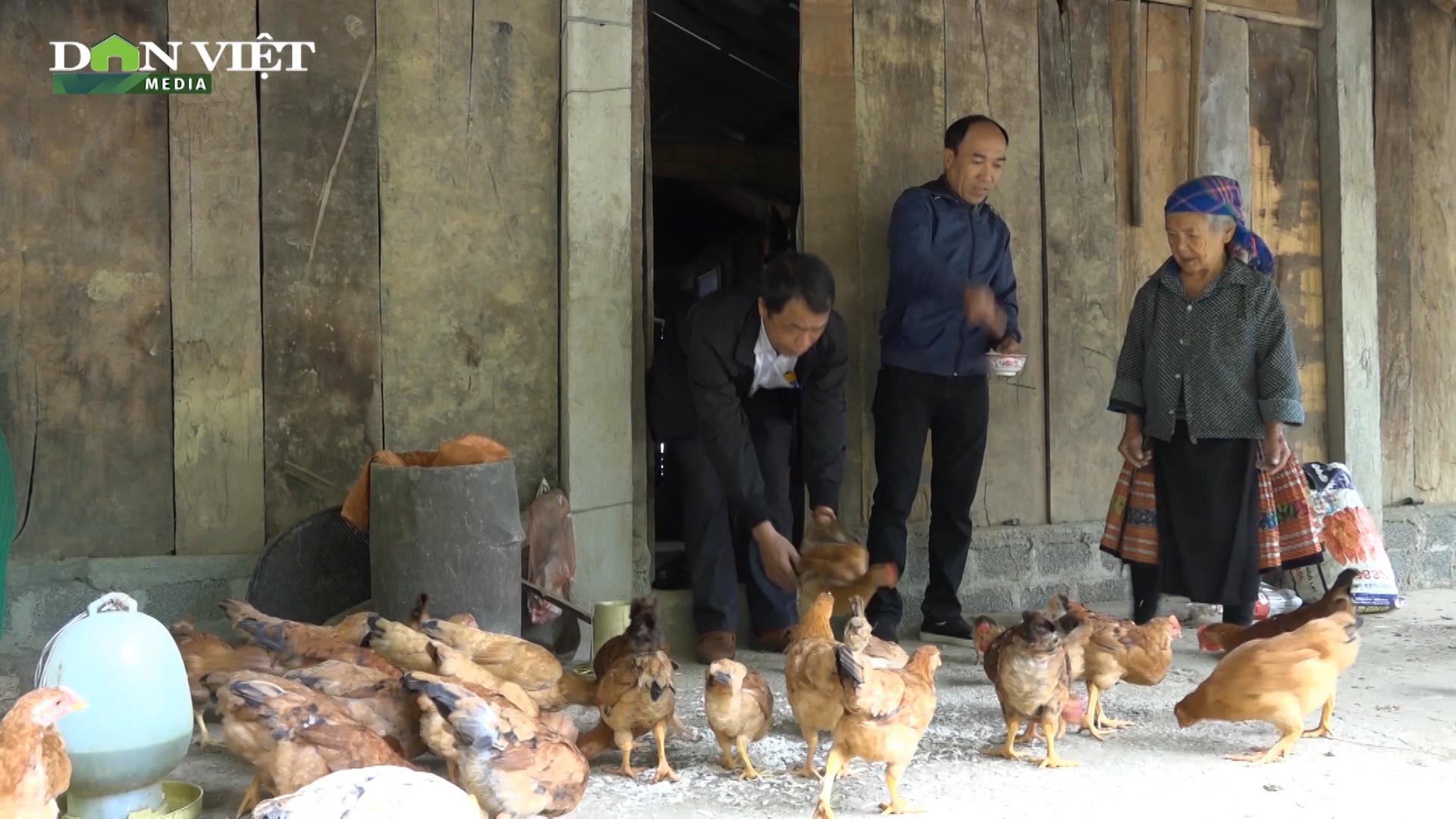 Mô hình nuôi gà đẻ cực hiệu quả, giúp bà con dân tộc ở Pá Lau thoát nghèo - Ảnh 3.
