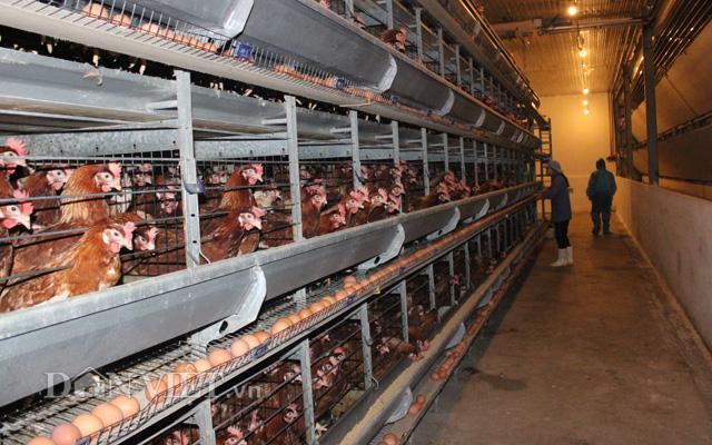 Clip Chỉ có xuất khẩu thì con xóa đói giảm nghèo mới cứu được nông dân - Ảnh 5.
