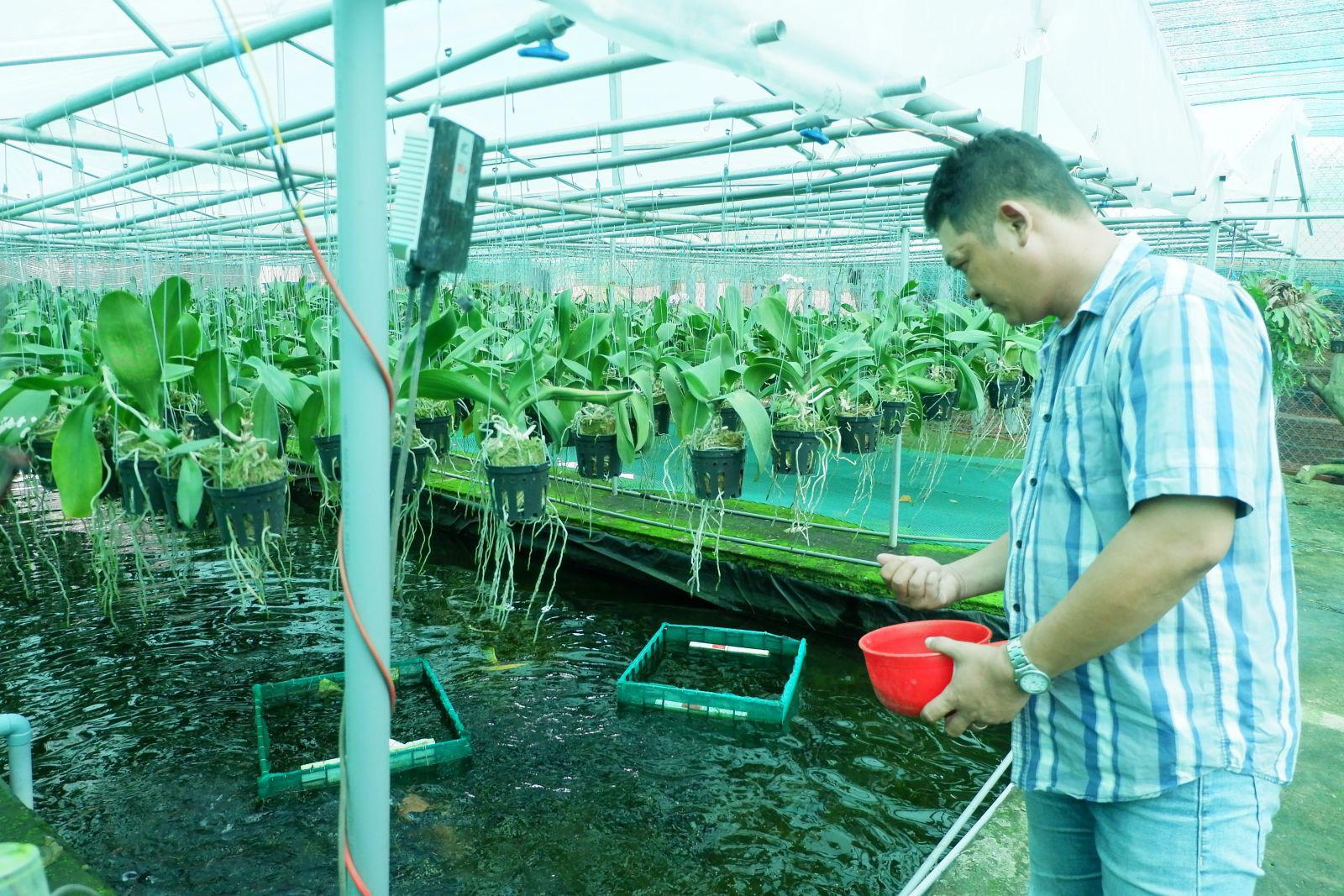 Long An: Làm nông nghiệp công nghệ cao, trên trồng phong lan rừng, dưới nuôi cá bơi tung tăng, chàng Hoàng Hậu kiếm bộn tiền - Ảnh 1.