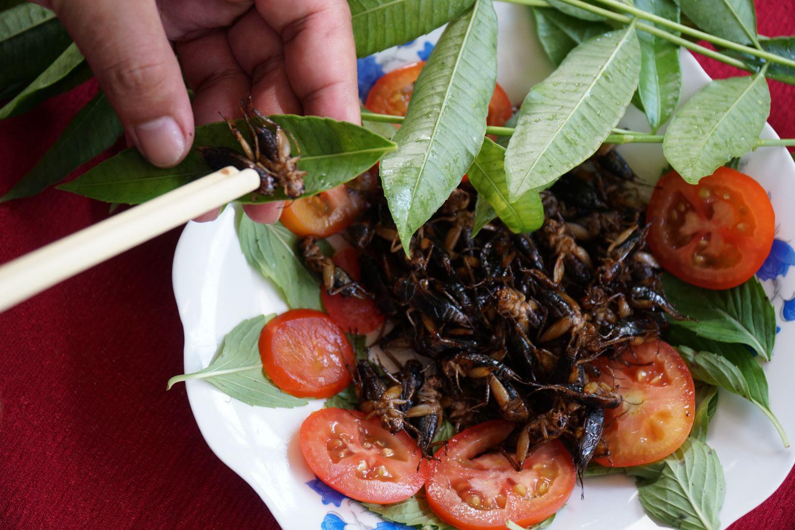 Nuôi loài côn trùng cứ 42 ngày là gáy râm ran, nghiền ăn lá mì, nông dân 9X đất Tây Đô kiếm bộn tiền - Ảnh 12.
