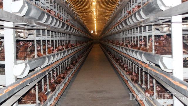 Clip Chỉ có xuất khẩu thì con xóa đói giảm nghèo mới cứu được nông dân - Ảnh 6.