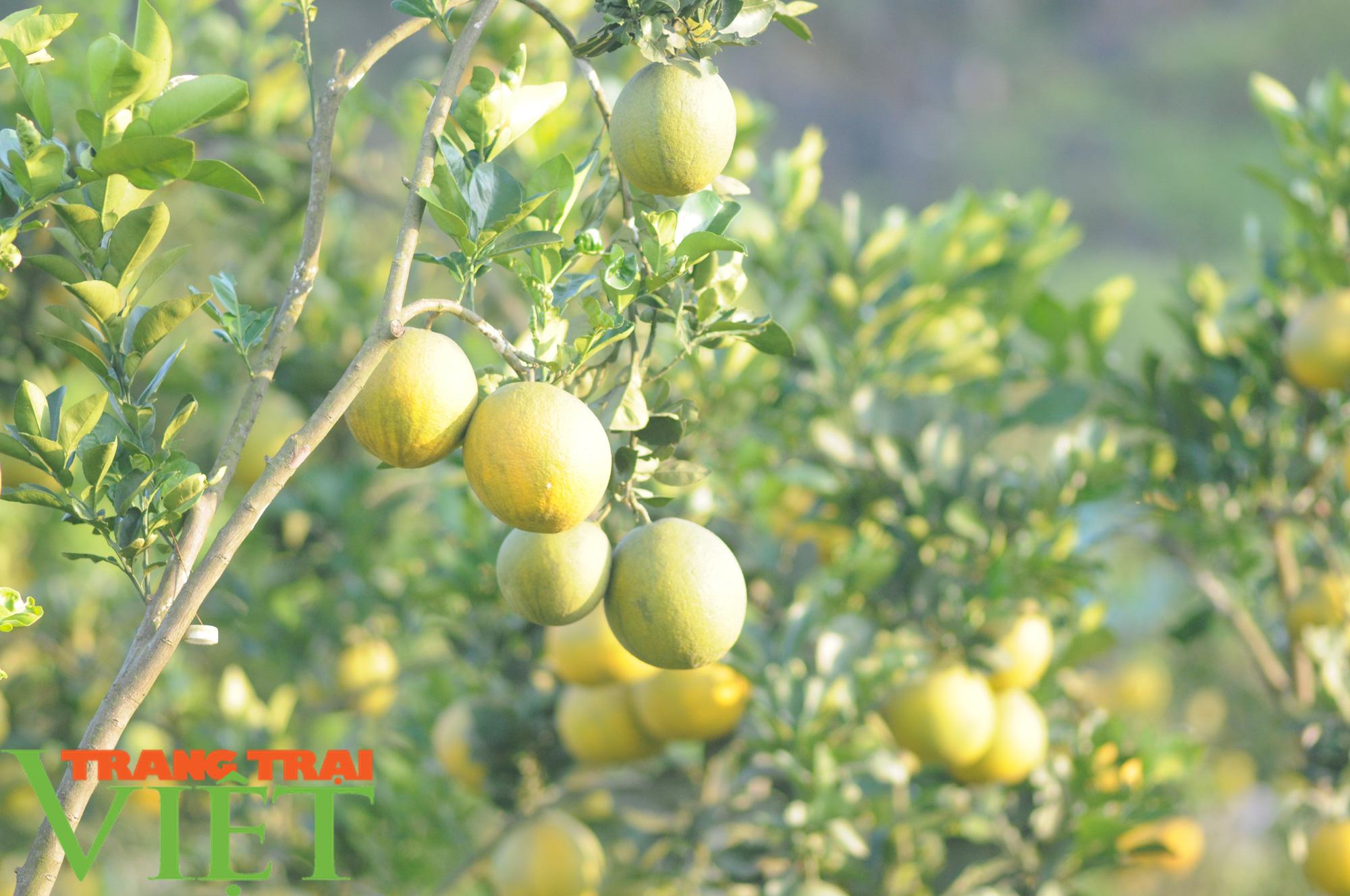Chỉ trồng cây ăn quả, cựu binh thu nửa tỷ mỗi năm - Ảnh 3.