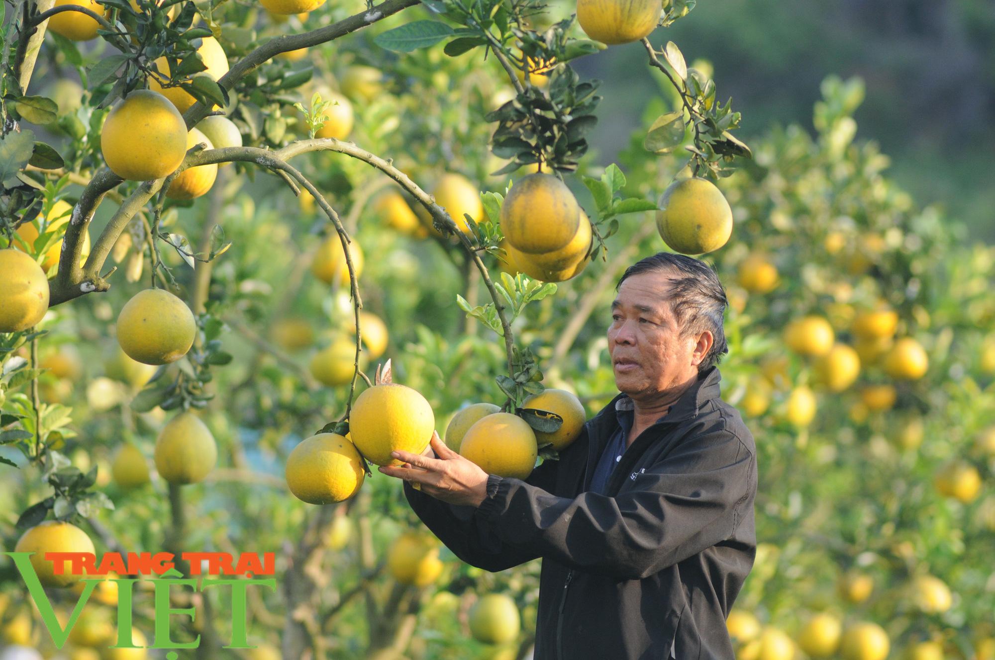 Chỉ trồng cây ăn quả, cựu binh thu nửa tỷ mỗi năm - Ảnh 1.