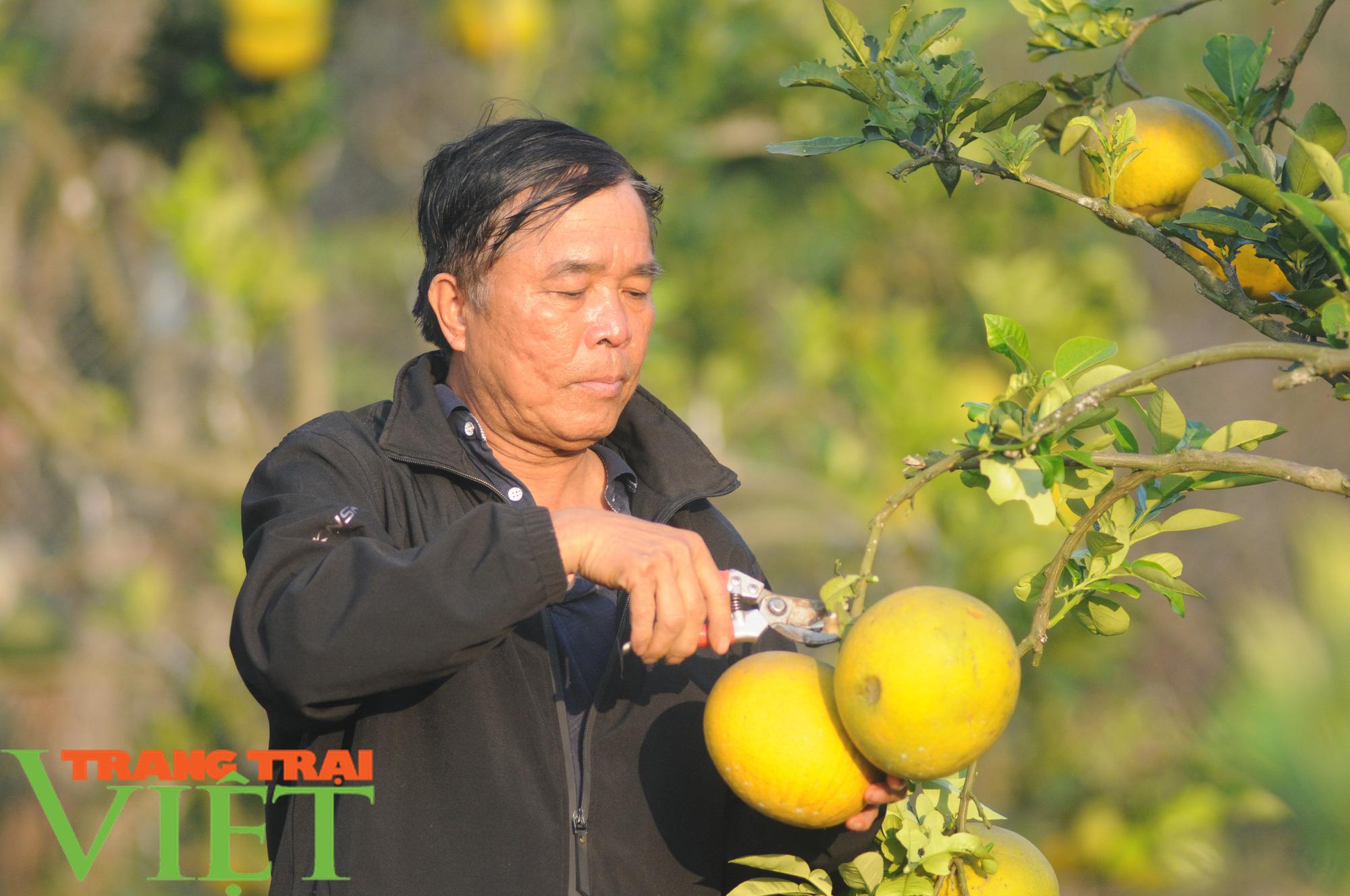 Chỉ trồng cây ăn quả, cựu binh thu nửa tỷ mỗi năm - Ảnh 2.