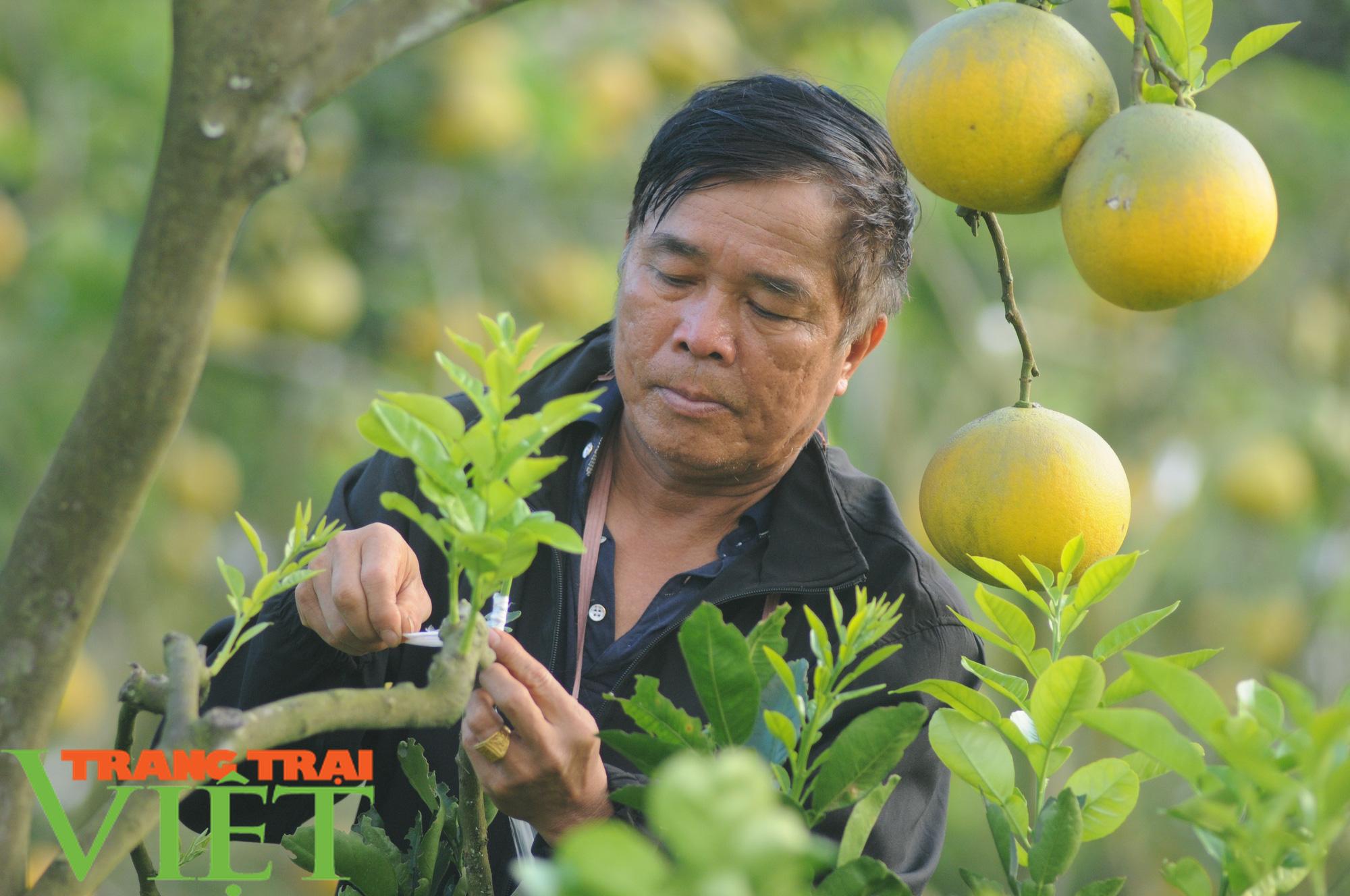 Chỉ trồng cây ăn quả, cựu binh thu nửa tỷ mỗi năm - Ảnh 4.