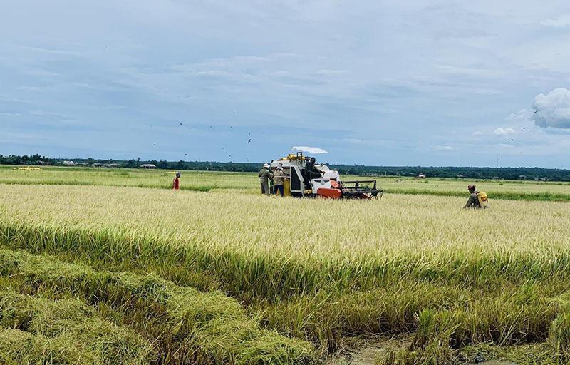 Việt Nam lập kỷ lục hiếm có trong xuất khẩu nông sản - Ảnh 1.