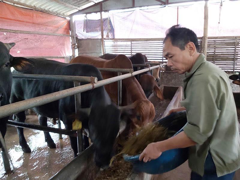 Thành phố nào của nước ta có tới 92 trang trại nuôi bò thịt quy mô lớn, câu trả lời khiến nhiều người bất ngờ - Ảnh 1.