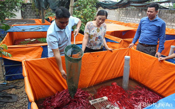 Một ông nông dân tỉnh Nghệ An nuôi ba ba bò lổm ngổm, nuôi lươn nhung nhúc mà nhiều người tìm đến xem