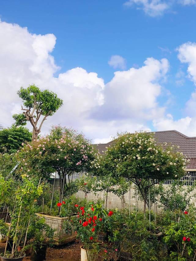 Đắk Lắk: Tốt nghiệp đại học, 9X bỏ việc ở phố về quê trồng vườn hoa hồng quý hiếm, thơm khắp xóm, ai cũng khen - Ảnh 2.